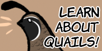 Learn about quails!