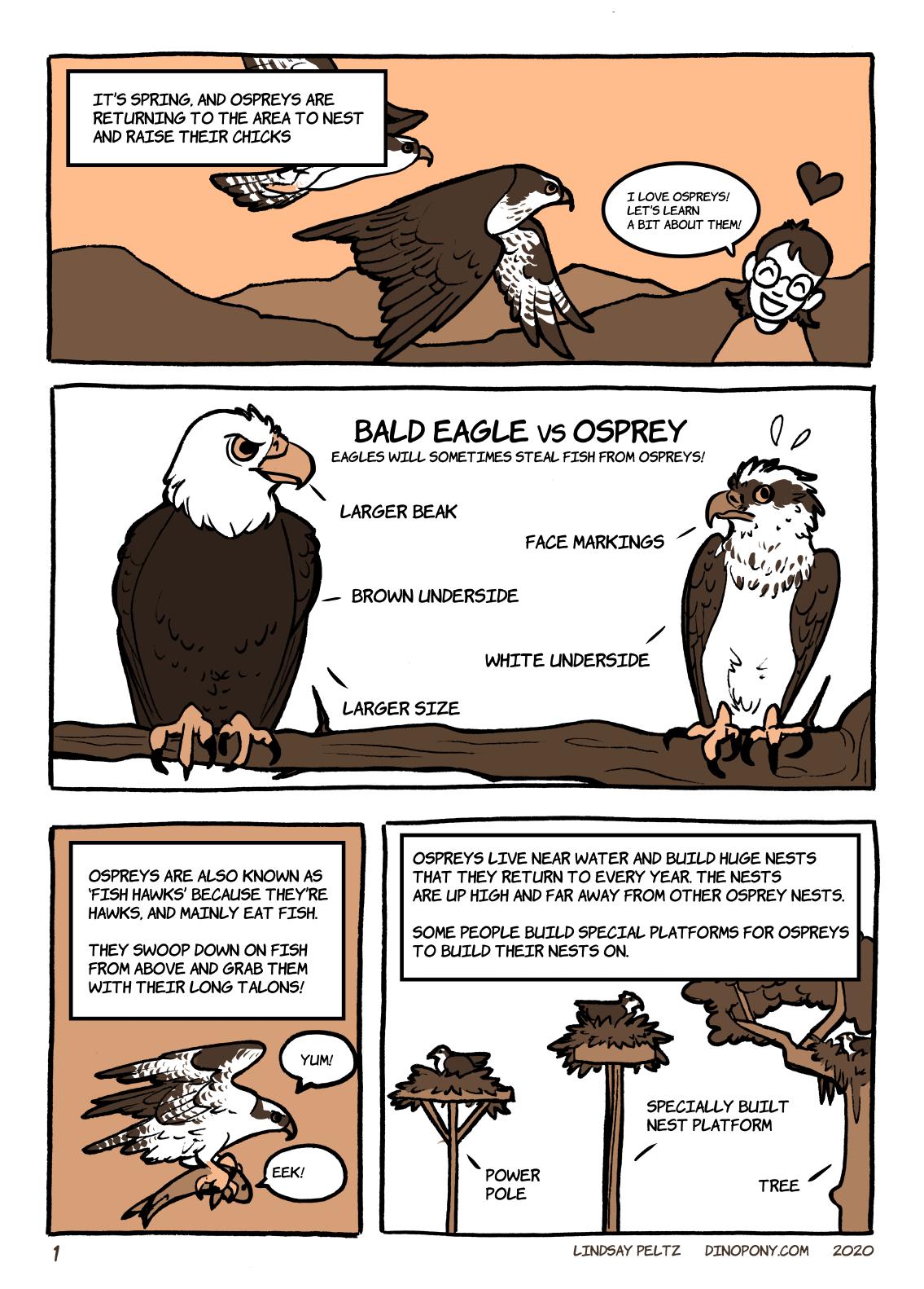 Osprey comic - page 1
