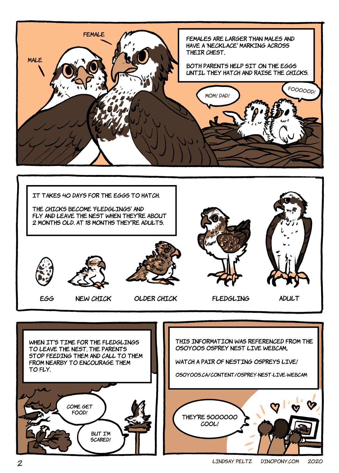 Osprey comic - page 2